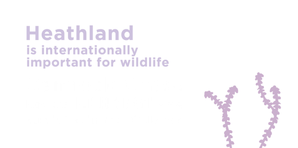 Heathland is internationally important for wildlife. Cannock Chase has the largest area surviving in the midlands.
