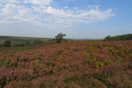Heathland over Cannock Chase