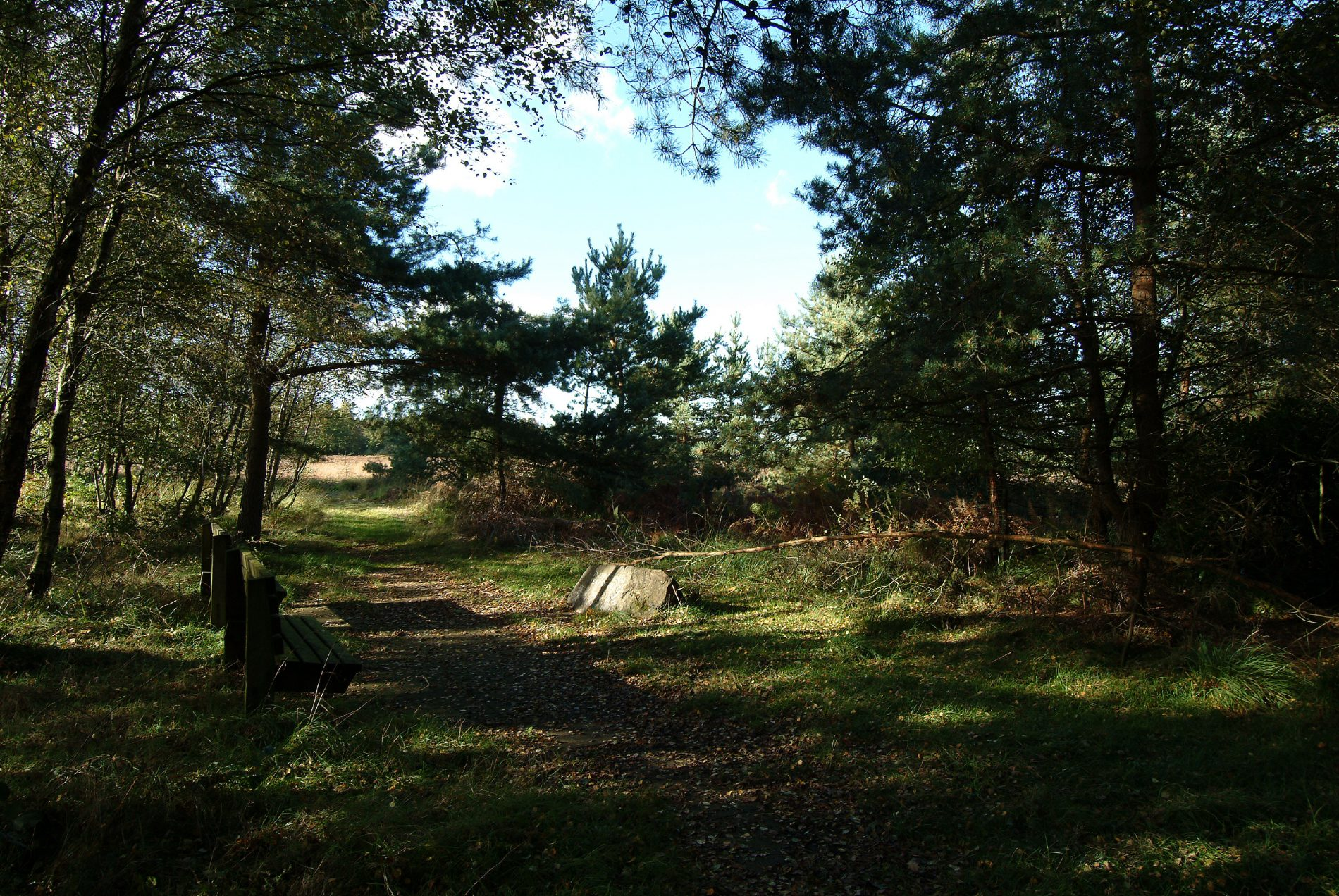 Staying inspired – Cannock Chase brought to you!
