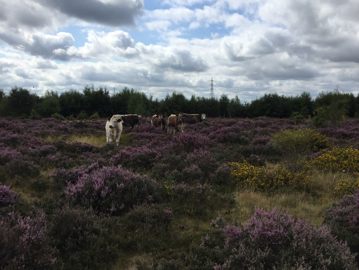 Managing Cannock Chase – Update